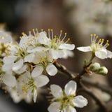 Blumen, die auf Bienen warten Stockfotografie