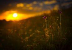 Blumen, die auf der Sonne stillstehen Stockbilder