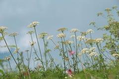 Blumen, die auf der Wand von blauem See blühen Stockfotografie
