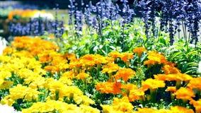Blumen, die in den Blumenbeetleuten blühen stock video