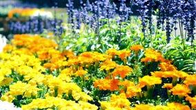 Blumen, die in den Blumenbeetleuten blühen stock video footage