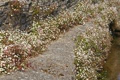 Blumen, die eine Brücke gestalten stockfotos