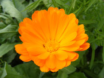 Blumen, die eine Schönheit sind, boten dem Menschen von der Natur an Stockbilder
