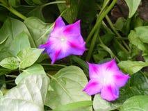 Blumen, die eine Schönheit sind, boten dem Menschen von Natur 2 an Lizenzfreies Stockbild