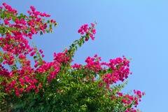 Blumen, die im Sonnenschein blühen lizenzfreies stockfoto