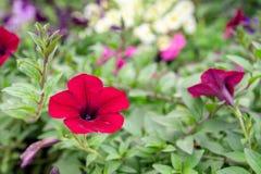 Blumen, die morgens mit vielen bunten grünen Blättern blühen lizenzfreie stockfotos