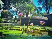 Blumen, die oben auf einen See schwimmen lizenzfreies stockbild