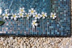 Blumen, die in Swimmingpool schwimmen Lizenzfreie Stockfotos
