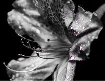 Blumen-Drama Stockbild