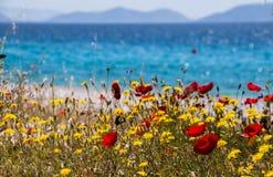 Blumen durch das Meer Kineta-Strand, Griechenland lizenzfreie stockbilder
