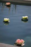 Blumen durch das Pool Stockfotos