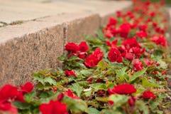 Blumen durch den Bürgersteig Stockbilder