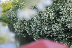 Blumen durch den Fluss stockbilder