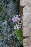 Blumen durch den Fluss Lizenzfreie Stockfotos