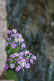 Blumen durch den Fluss Stockfotografie