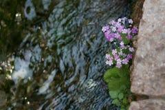 Blumen durch den Fluss Stockbild