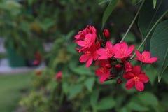 Blumen durch den Fluss Lizenzfreies Stockbild