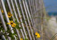 Blumen durch den Strandzaun Stockfotos