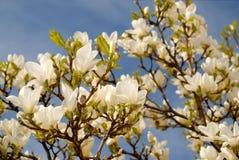 Blumen durch die Sonne Lizenzfreies Stockfoto