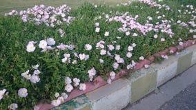 Blumen durch die Straßen-Seite Stockfotografie