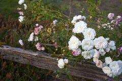 Blumen durch einen Zaun Stockfoto