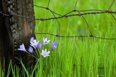 Blumen durch Fencepost lizenzfreies stockbild