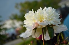 Blumen durch Tageslicht stockbild