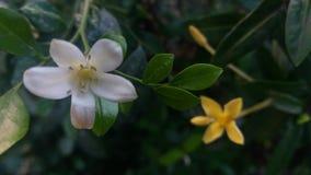 2 Blumen stockfoto