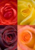 Blumen: ein Hintergrund Stockfotografie