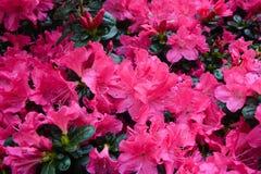 Blumen in einem botanischen Garten Stockfoto
