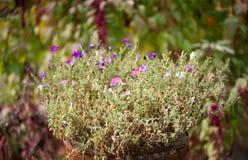 Blumen in einem Faß Stockbild