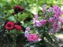 Blumen an einem Garten Stockbilder