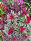 Blumen in einem Garten Lizenzfreie Stockfotos