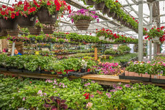 Blumen in einem Gartenspeicher Lizenzfreies Stockbild