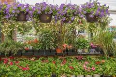 Blumen in einem Gartenspeicher Stockfoto
