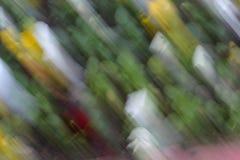 Blumen in einem hellen Unschärfehintergrund Stockfoto