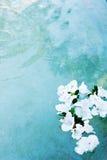 Blumen in einem Pool Lizenzfreies Stockbild