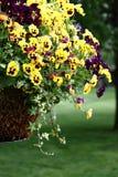 Blumen in einem Potenziometer Lizenzfreie Stockfotos