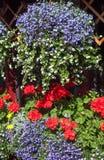 Blumen in einem Potenziometer Stockfotos