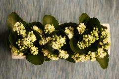 Blumen in einem Potenziometer lizenzfreie stockbilder