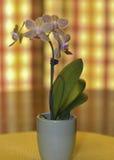 Blumen in einem Potenziometer Lizenzfreie Stockfotografie