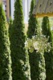 Blumen in einem Potenziometer stockbild