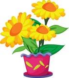 Blumen in einem Potenziometer Stockfoto