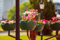 Blumen in einem Potenziometer Stockfotografie