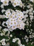 Blumen an einem sonnigen Tag Stockfotografie