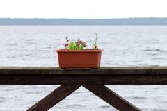 Blumen in einem Topf über dem Meer Stockbild