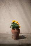 Blumen in einem Topf Lizenzfreie Stockfotos