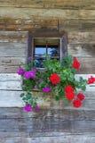Blumen in einem Topf auf einem Fenster Stockfoto