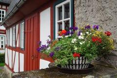 Blumen in einem Topf auf einem Hintergrund des Hauses Lizenzfreies Stockfoto