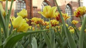 Blumen in einem Wind 4k UHD stock video